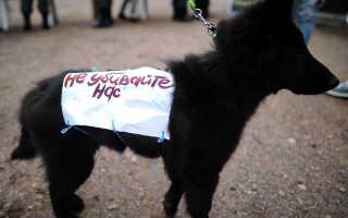 Ответственность за жестокое обращение с животными РФ